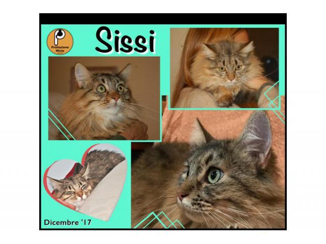 Protezione Micio Onlus: ADOZIONE del CUORE gatta Sissi