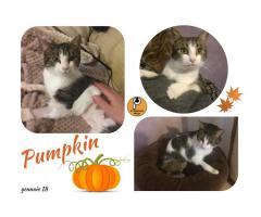 Protezione Micio Onlus: adozione gatta Pumpkin