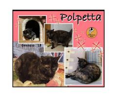 Protezione Micio Onlus: adozione gatta Polpetta