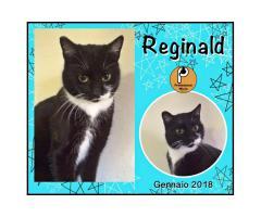 Protezione Micio Onlus: adozione gatto Reginald