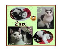 Protezione Micio Onlus: adozione gatto Zazu