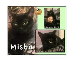Protezione Micio Onlus: adozione gatta Misha