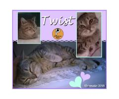 Protezione Micio Onlus: adozione gattina Twist
